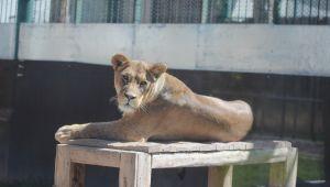 Anadolu Harikalar Diyarı Hayvanat Bahçesi 24 bin ziyaretçiyi ağırladı