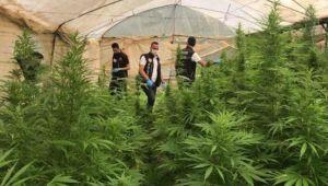 Evinin bahçesinde hint keneviri yetiştiren 2 kişi gözaltına alındı