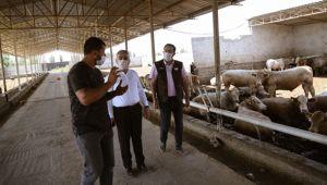 Şahin'den besi çiftliklerine ziyaret