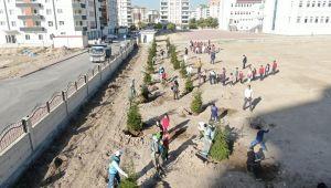 Kocasinan Belediyesi, ağaç dikimiyle geleceğe nefes oluyor