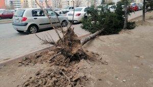 Kayseri'de kuvvetli rüzgar ağaçları söktü, çatıları uçurdu