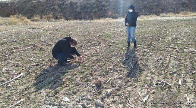Yerli ve milli tohumların ulaşmadığı çiftçi kalmayacak
