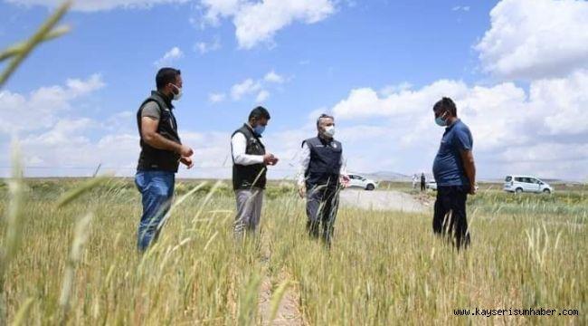 İl Tarım ve Orman Müdürü Şahin, Tomarza'da hasar tespit çalışmalarına katıldı