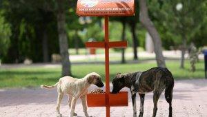 Kocasinan Belediyesi'nden sokak hayvanlarına yem ve mama takviyesi