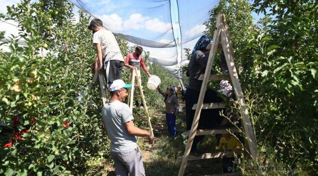 Kayseri'de elma hasadı başladı