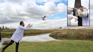 Tedavi edilen Hint Gölet Balıkçıl Kuşu doğaya bırakıldı