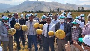 Türkiye'de ilk; ilk yerli ve milli kabak çekirdeği 'Keykubat'ın ilk ürünleri hasat edildi